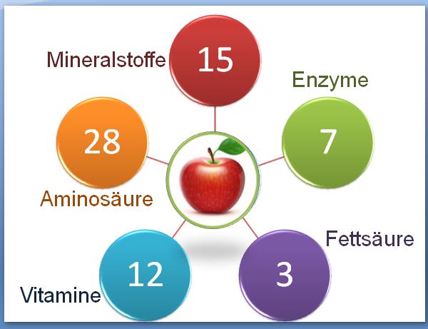 Nahrung für Zellen